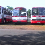 Triolet Bus Service Co. Ltd 1